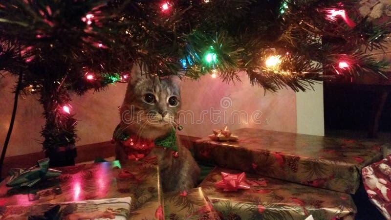 Natale Cat Elsa fotografie stock