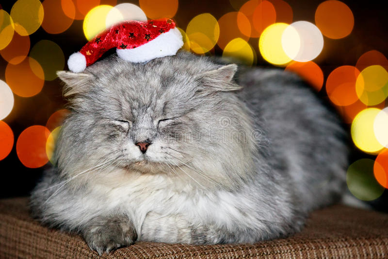 Natale del gatto immagini stock