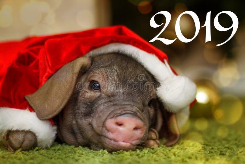 Natale e carta del buon anno con il maiale neonato sveglio di Santa in contenitore attuale di regalo Simbolo delle decorazioni de fotografia stock libera da diritti