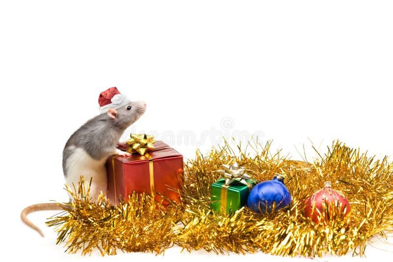 Natale o nuovo anno fotografie stock libere da diritti