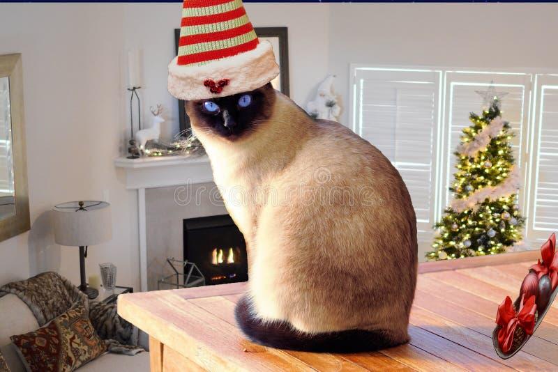 Natale sveglio e gatto divertente che porta un cappello dell'elfo che si siede su una tavola in una stanza decorata della casa di fotografie stock libere da diritti