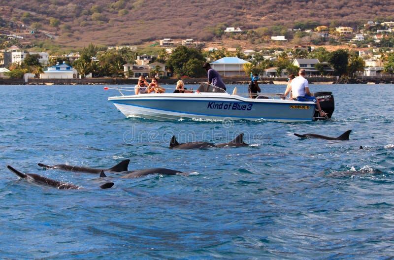 Natation avec des dauphins photographie stock libre de droits