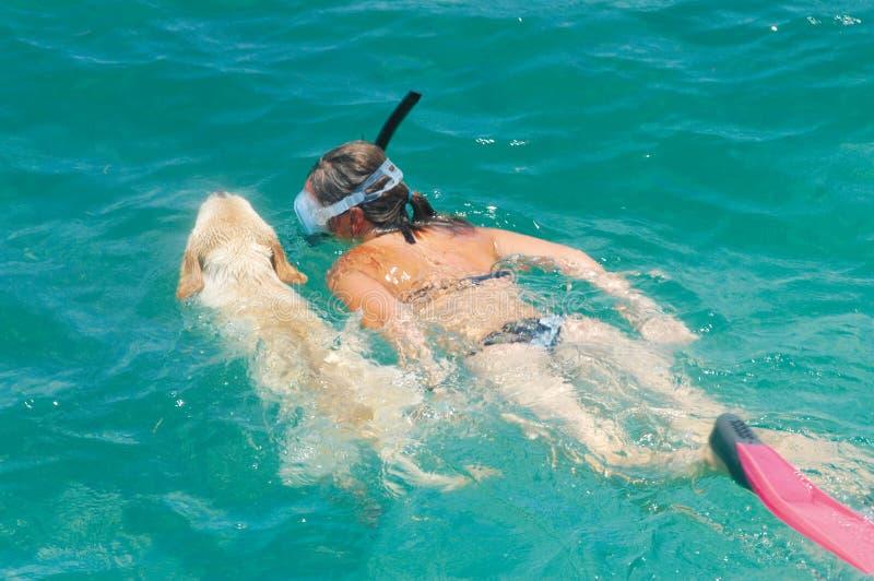 Natation de chien d'arrêt de Labrador avec le femme photo libre de droits