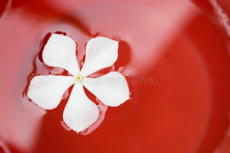 Natation de fleur blanche en peinture rouge images libres de droits
