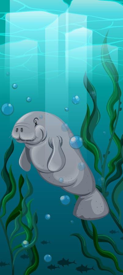 Natation de lamantin sous l'eau illustration de vecteur