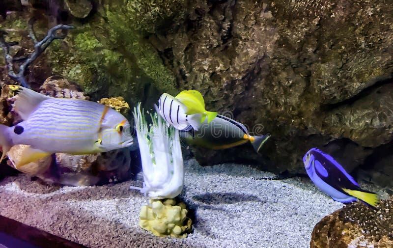 Natation de poissons photographie stock