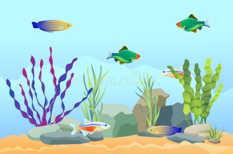 Natation de poissons d'aquarium parmi les pierres et l'algue illustration libre de droits