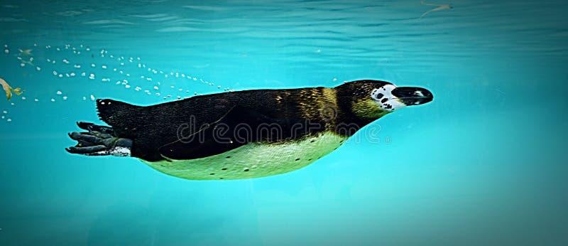 Natation sous-marine photos stock