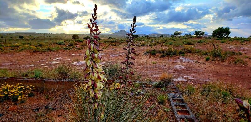 Nation de Navajo/Tonalea Az image libre de droits
