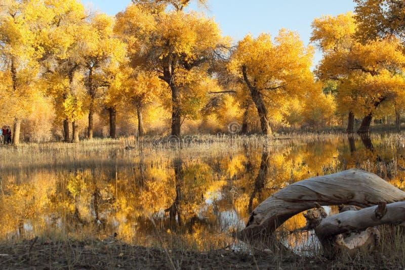 Nationaal Natuurreservaat van Populus royalty-vrije stock afbeelding