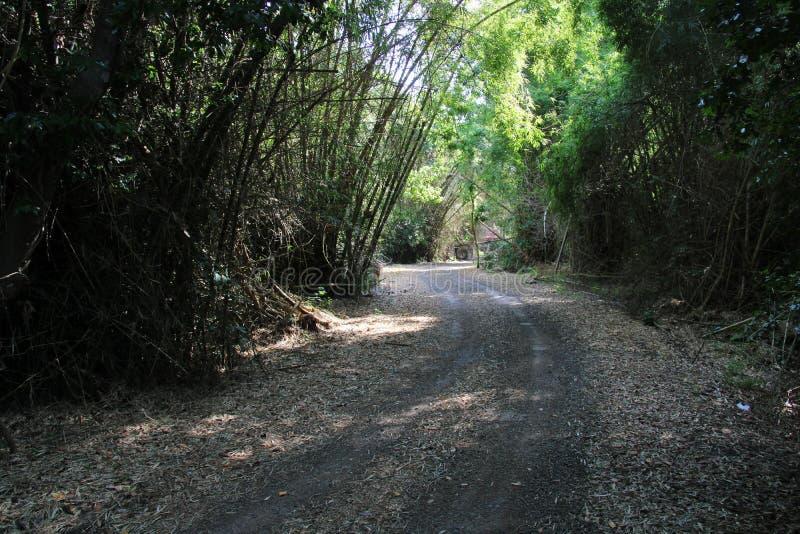 Nationaal park Alas Purwo royalty-vrije stock afbeelding
