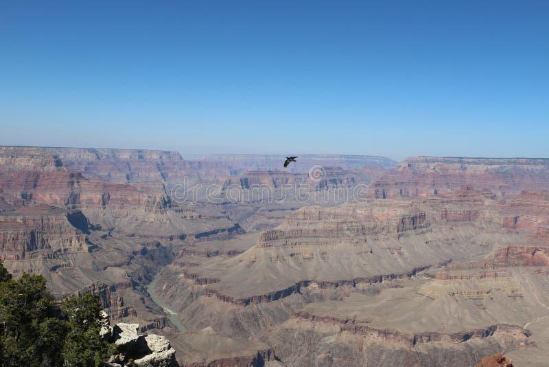 Nationaal park Grand Canyon in de Verenigde Staten stock foto's