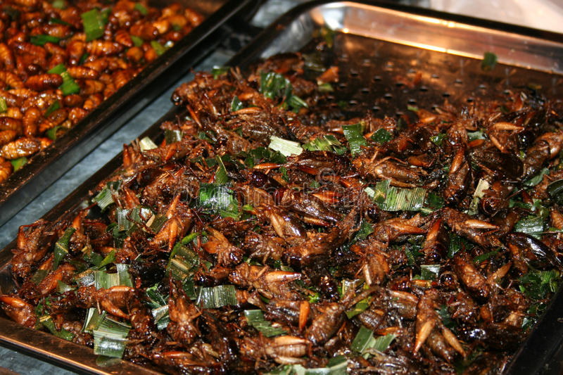 National Asian cuisine insects after grilling. In oil royalty free stock image