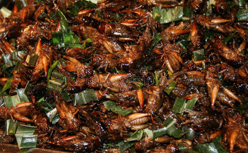 National Asian cuisine insects after grilling. In oil royalty free stock photo