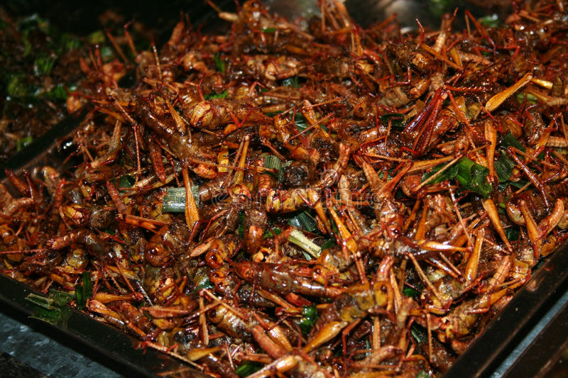 National Asian cuisine insects after grilling. In oil stock image