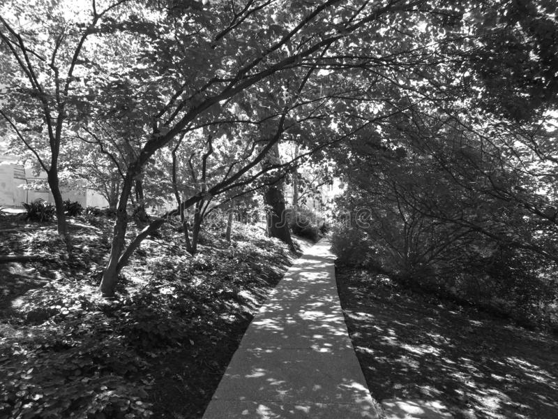 National Cathedral Walkway in Summer royalty free stock image