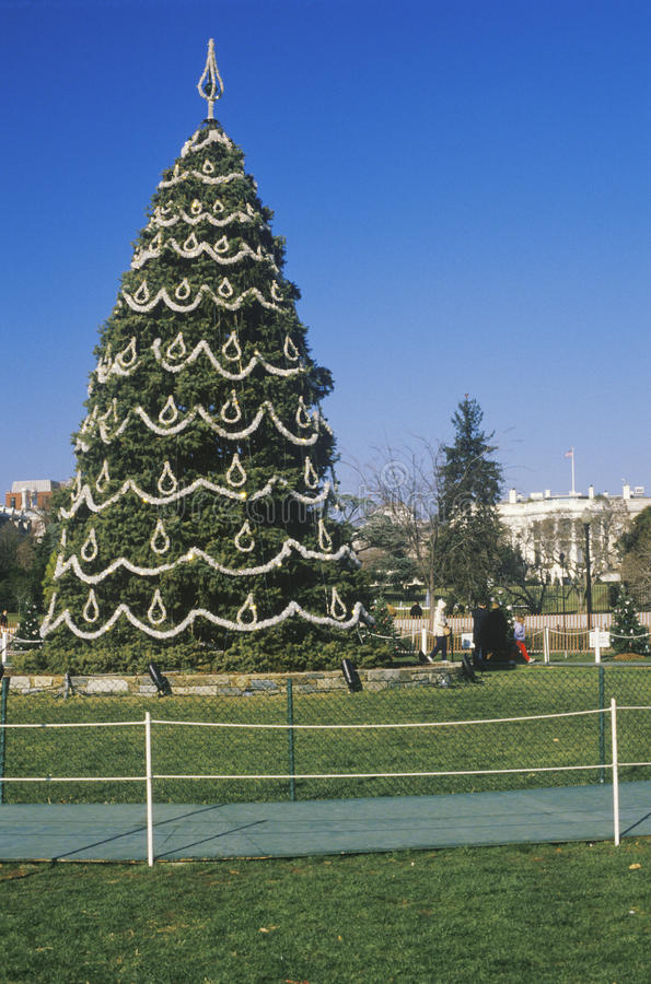 Download The National Christmas Tree Stock Image - Image of color, white: 26890689