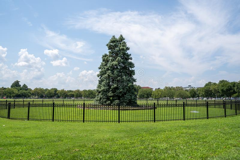 The National Christmas Tree in Presidents Park in the Ellipse area of the White House in Washington DC. Shown during summer stock image