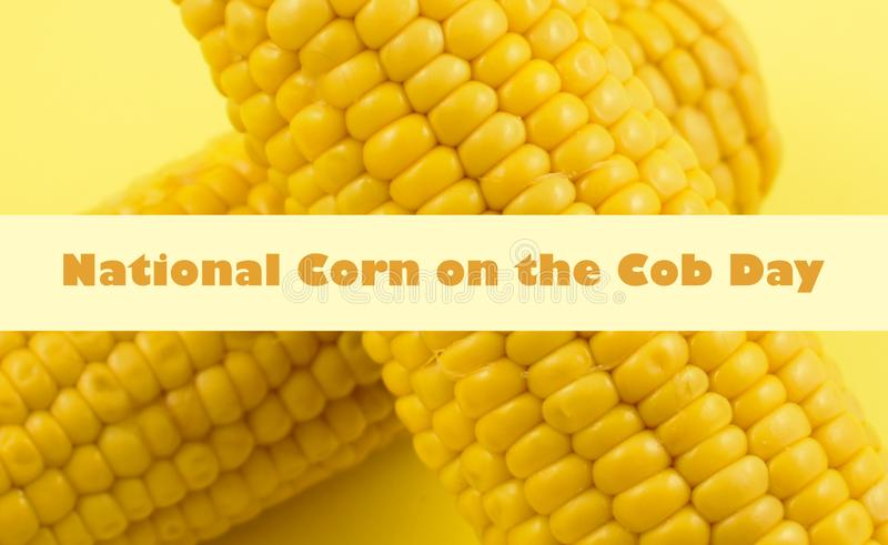 National Corn on the Cob Day images royalty free stock images