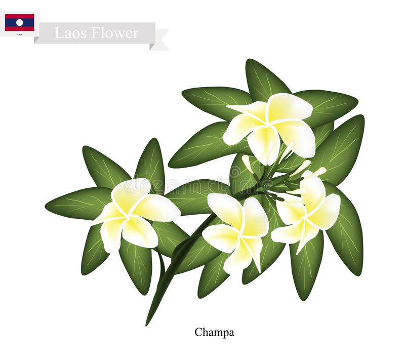 National Flower of Lao, Champa or Plumeria Frangipanis stock illustration