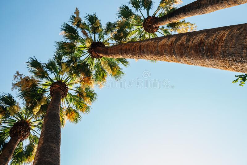 National Garden palm trees in Athens, Greece. Europe royalty free stock photo