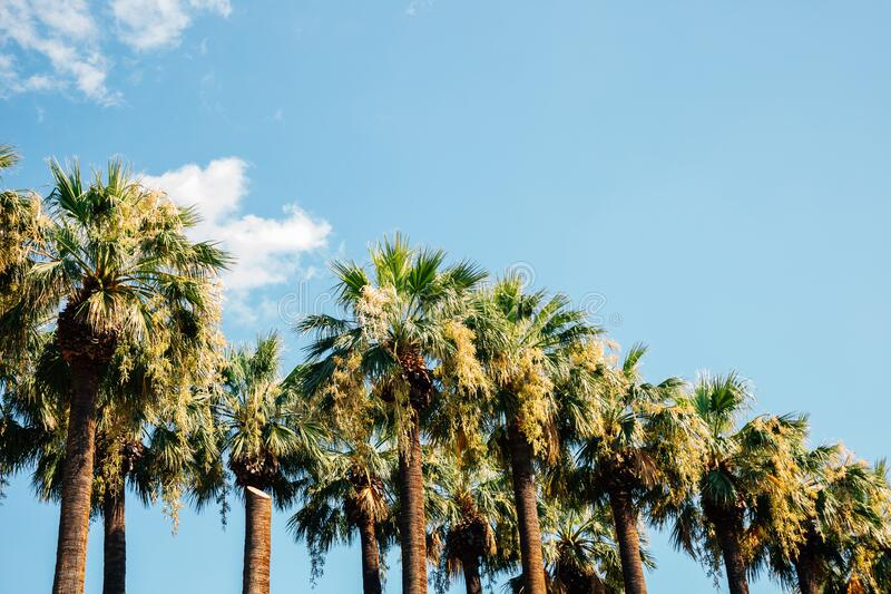 National Garden palm trees in Athens, Greece. Europe stock photo