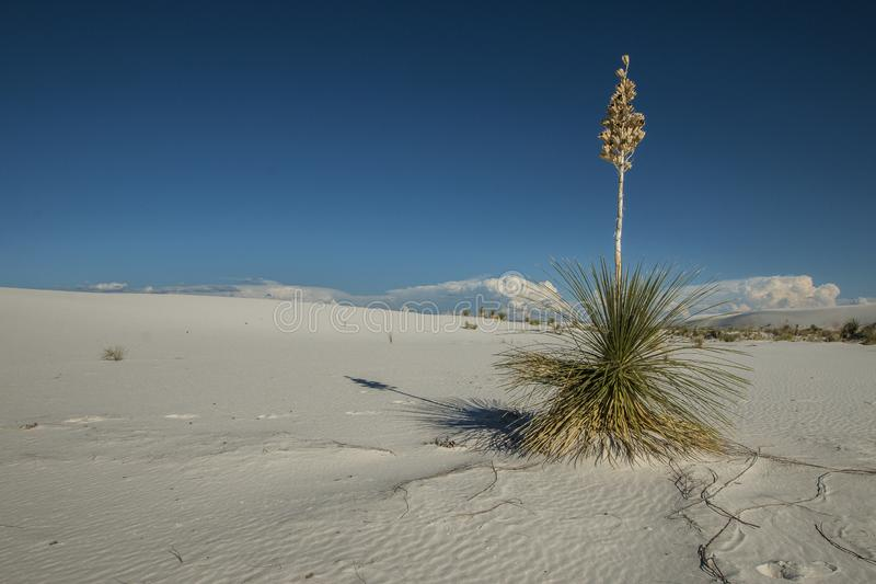 White Sands, National Monument, New Mexico, USA. National Monument, White Sands is in New Mexico, USA. It is no sand but Gypsum stock images