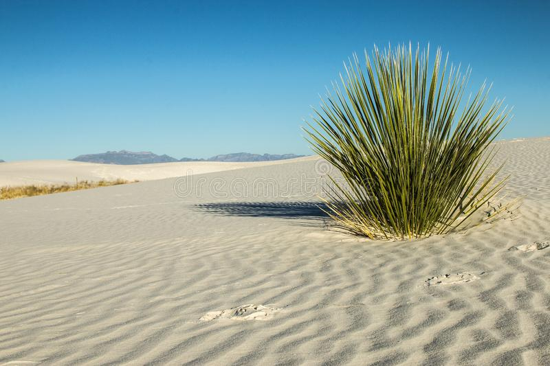 White Sands, National Monument, New Mexico, USA. National Monument, White Sands is in New Mexico, USA. It is no sand but Gypsum stock image