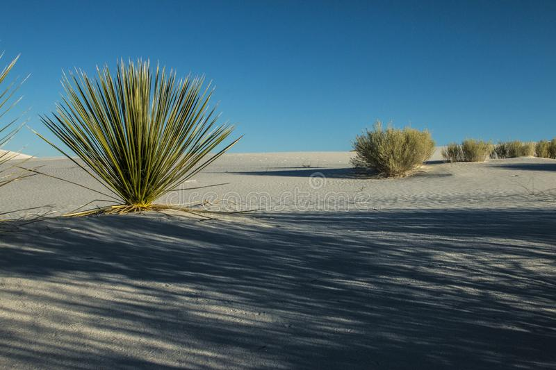 White Sands, National Monument, New Mexico, USA. National Monument, White Sands is in New Mexico, USA. It is no sand but Gypsum royalty free stock photos