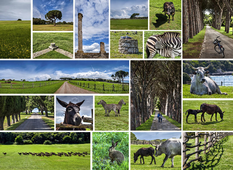 National park Brijuni, Croatia. Collage photos view of national park Brijuni (Istra - Croatia) with animals. Croatia. Horizontal color photo royalty free stock image