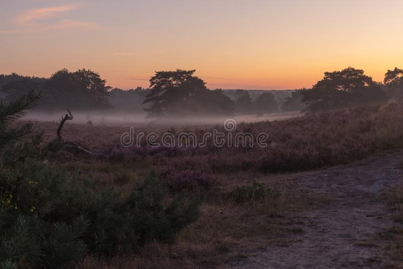National park Brunsummerheide with morning fog over the field in bloom and amazing colours in the sky royalty free stock photo