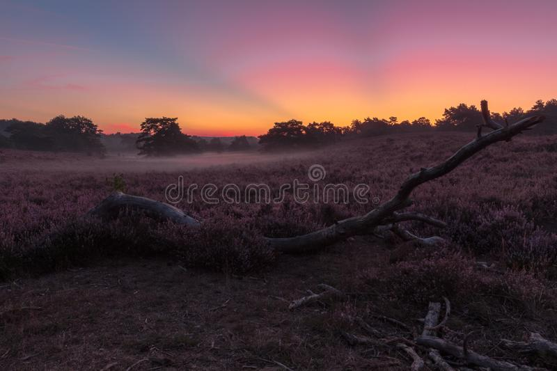 National park Brunsummerheide with morning fog over the field in bloom and amazing colours in the sky stock photography