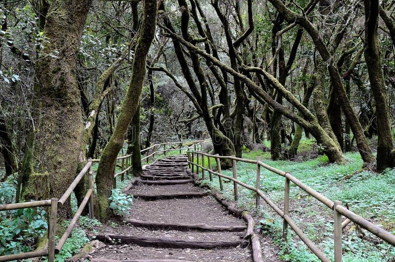 National Park Garajonay. In Laguna Grande, the island of La Gomera, Canary Islands, Spain stock photography