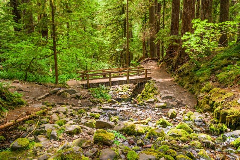 national park olimpijski Washington usa obraz royalty free
