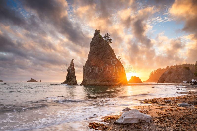 national park olimpijski Washington usa obraz stock