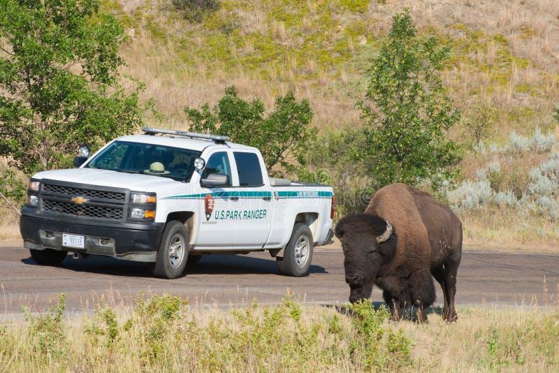 National Park Service amerikansk buffel arkivbilder