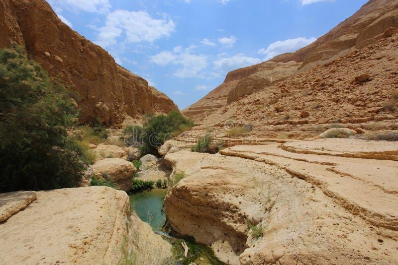 National Reserve Ein Gedi, Israel lizenzfreie stockfotografie