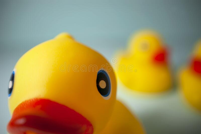 National Rubber Ducky Day stock photo