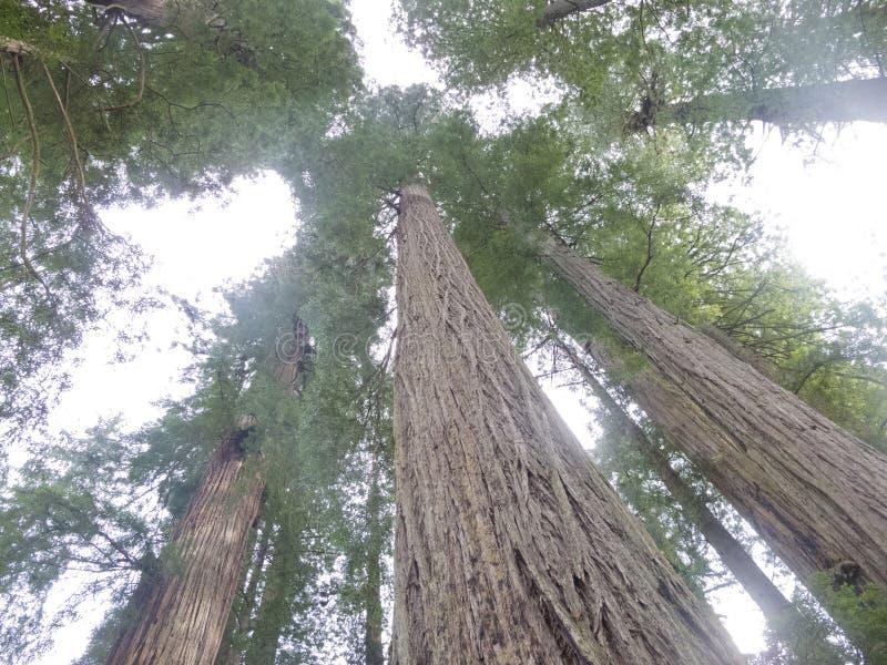Nationale Californische sequoia en de Parken van de Staat Californië CA de V.S. royalty-vrije stock fotografie