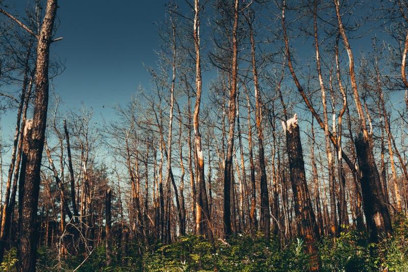 Nationale Milieuproblemen, milieuvervuiling, dode bos, schadelijke productie, barbaarse ontbossing, de bedreiging voor royalty-vrije stock fotografie