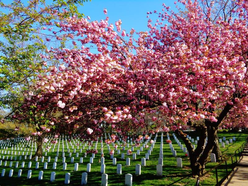 Nationale Militaire Begraafplaats in Arlington stock afbeeldingen