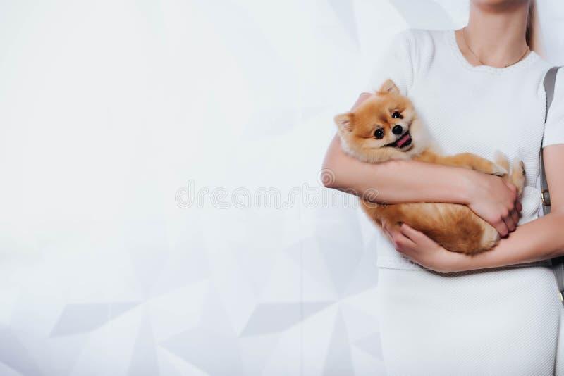 Nationaler Haustier ` s Tag Eine junge Frau hält einen Welpen in ihren Händen Kaufen eines Hundes glück Zu den Liebestieren Veter lizenzfreie stockfotografie