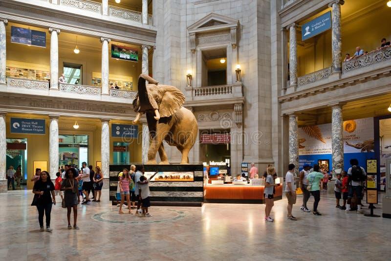 Nationalmuseum der Naturgeschichte in Washington D C stockfoto