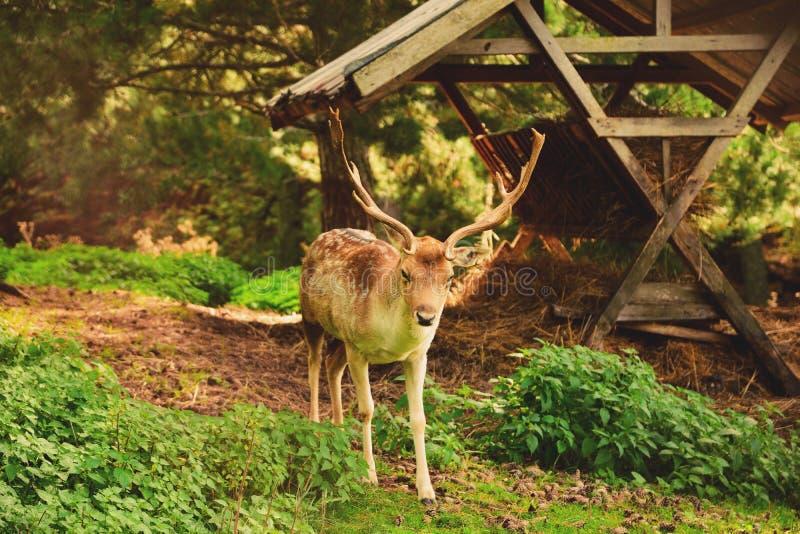 Nationalpark av Sila fotografering för bildbyråer