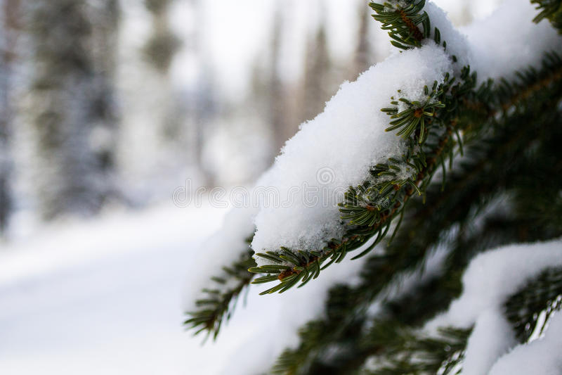 Nationalpark Banffs im Winter stockfoto