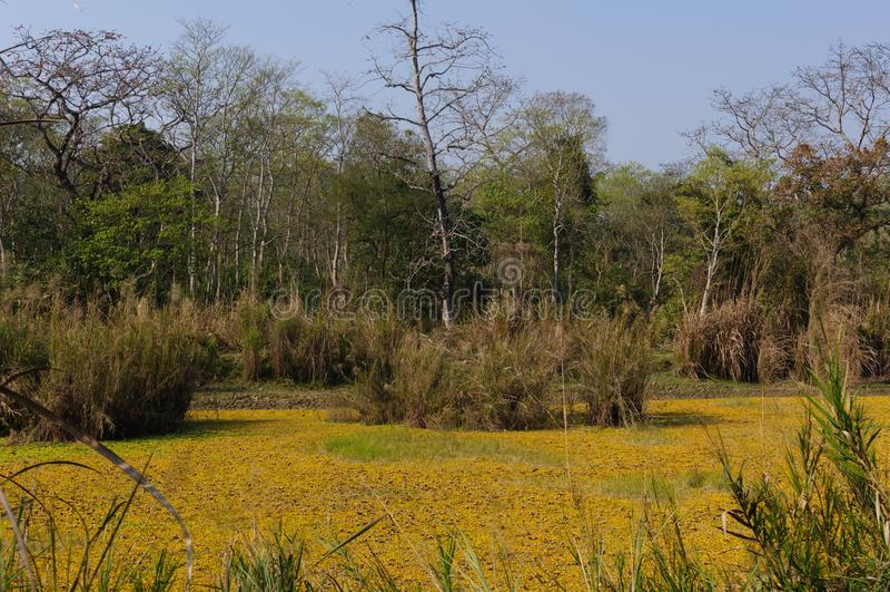 Nationalpark Chitwan in Nepal Schwarzweiss-Foto Pekings, China lizenzfreie stockbilder