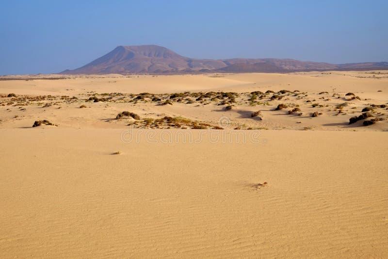 Nationalpark Corralejo auf Fuerteventura, Spanien stockfotos