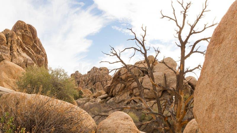 Nationalpark des Joshua-Baums lizenzfreies stockbild