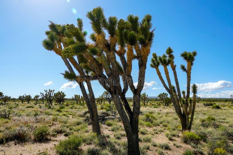 Nationalpark des Joshua-Baums Kalifornien, USA lizenzfreie stockfotos