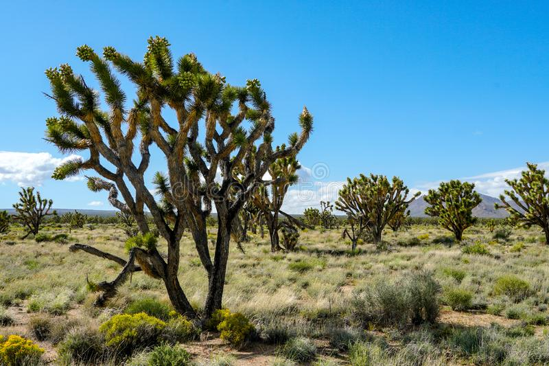 Nationalpark des Joshua-Baums Kalifornien, USA stockfotos